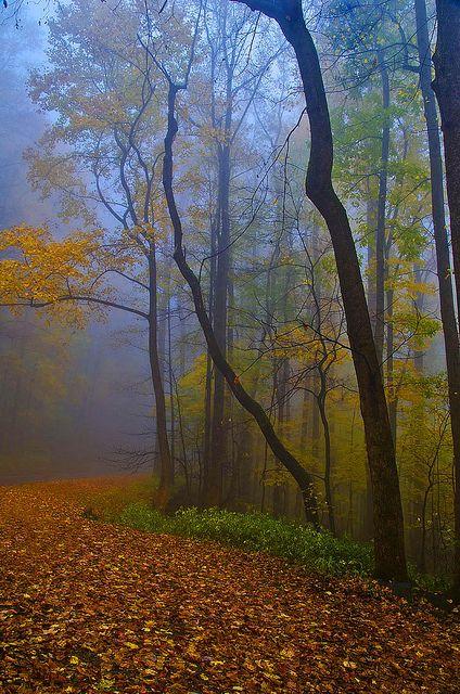 Things To Do in the Smoky Mountains - visitmysmokies.com