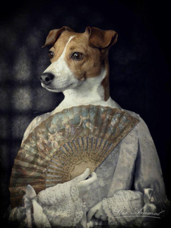 Philippe Tyberghien   Animaux en costumes, Chiens habillés, Art animalier