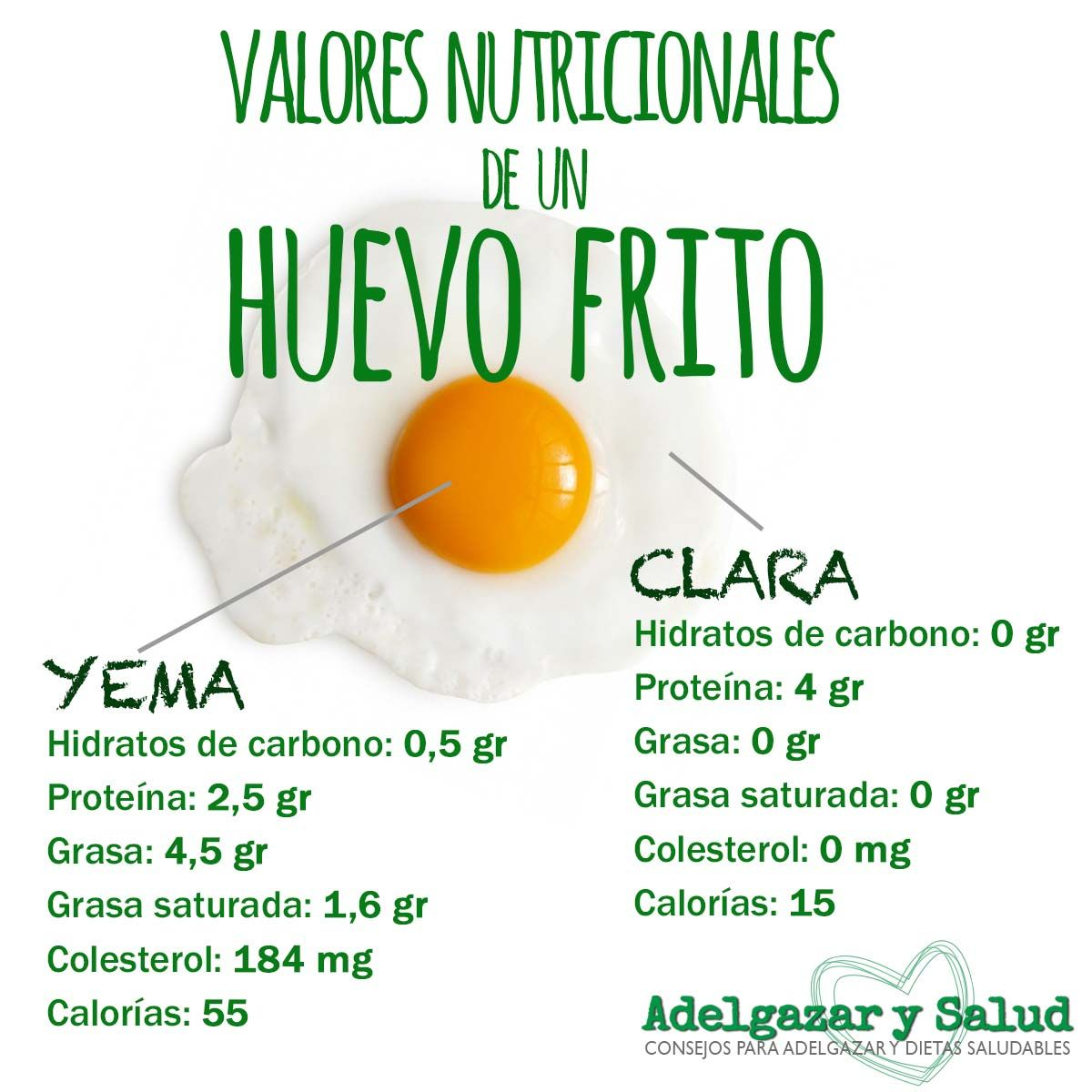 Huevo Calorías Adelgazar Nutrición High Protein Vegetables School Nutrition Healthy Cooking