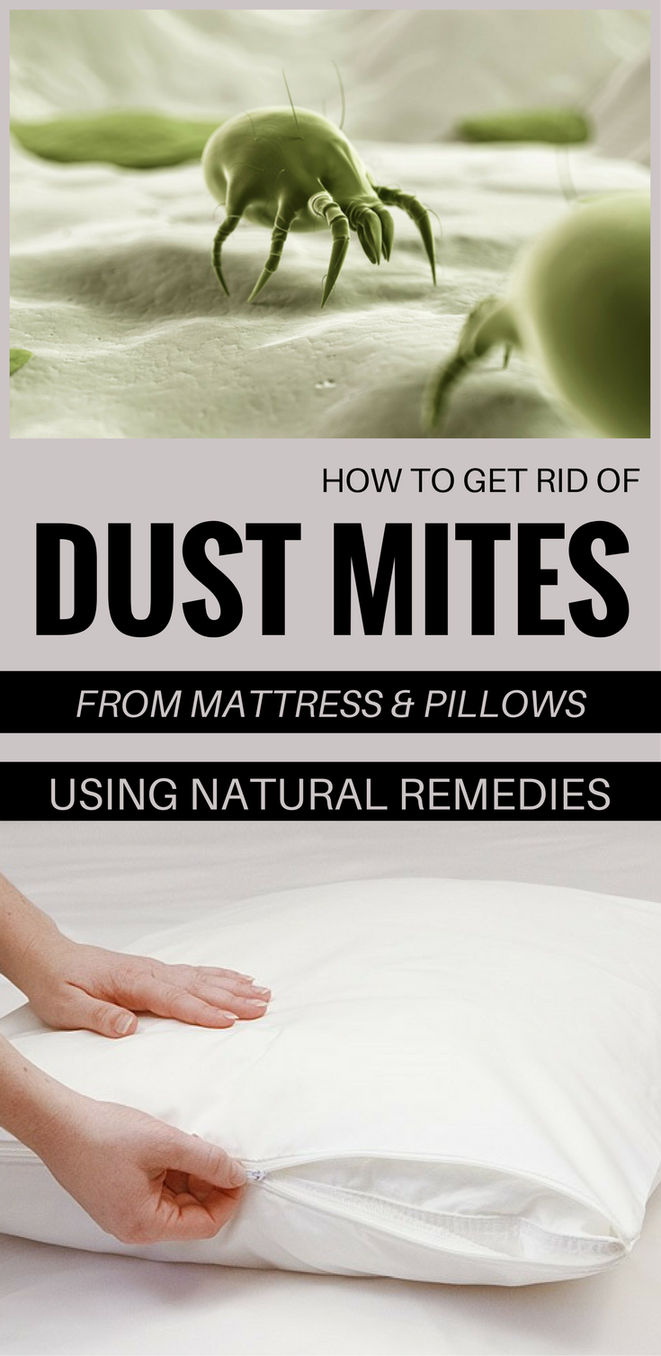 How To Get Rid Of Dust Mites From Mattress And Pillows Using Natural Remedies Cleaning Ideas Com Mattress Cleaning Dust Mites How To Get Rid
