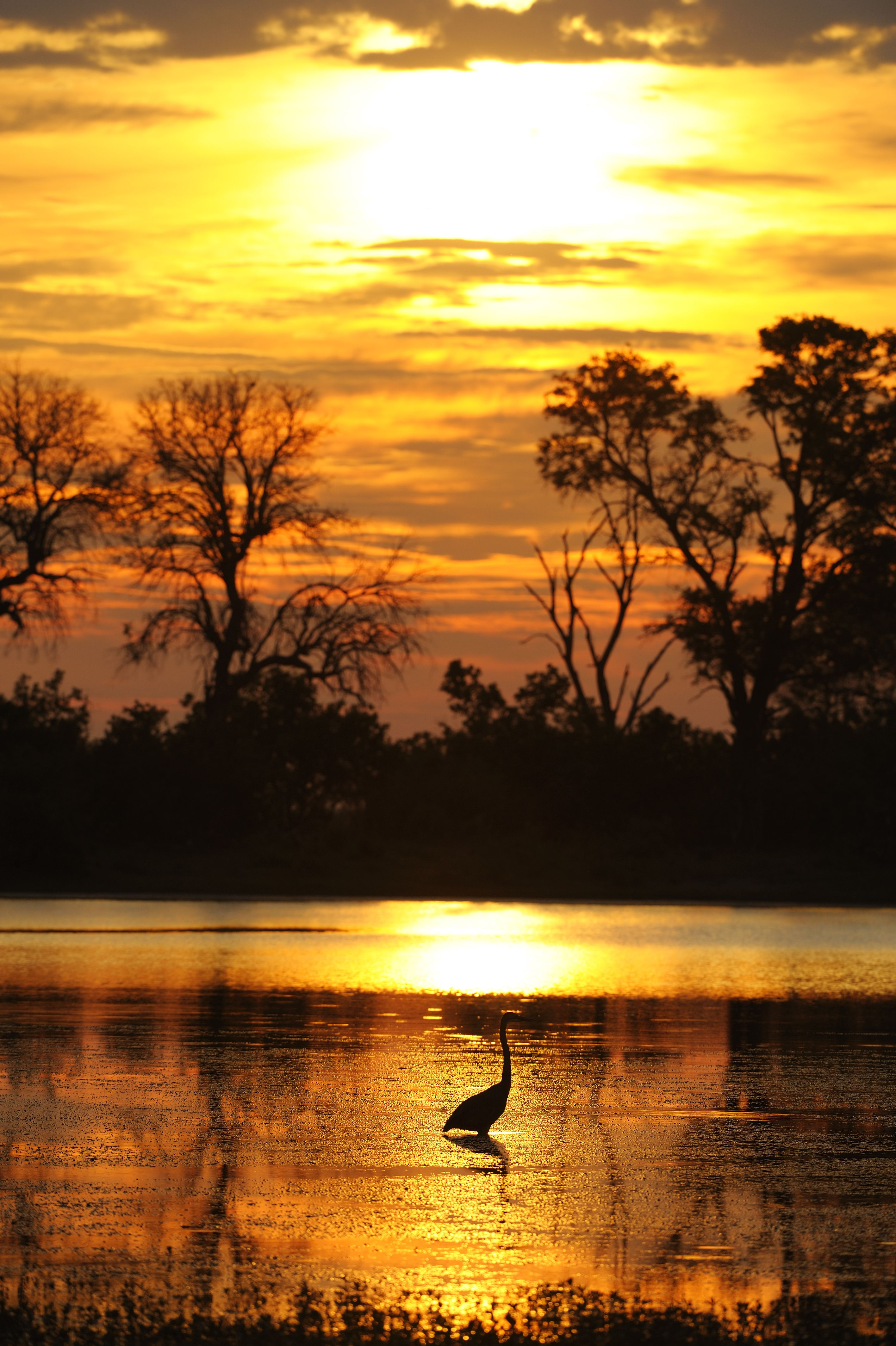 35 Africa Landscapes Ideas Africa East Africa Okavango Delta