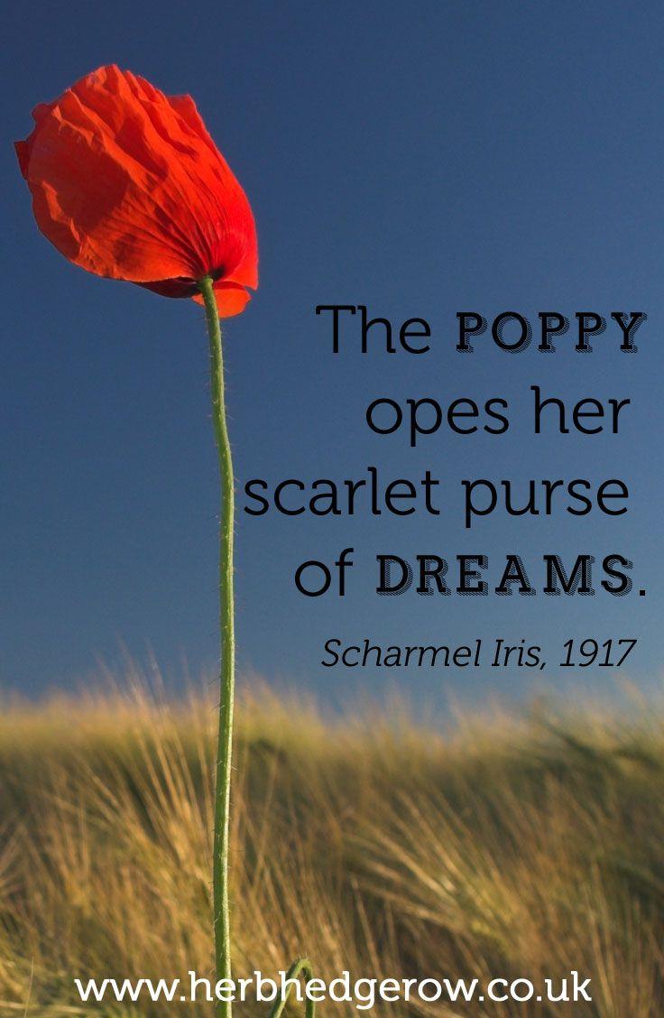 The Poppy Opes Her Scarlet Purse Of Dreams Scharmel Iris 1917