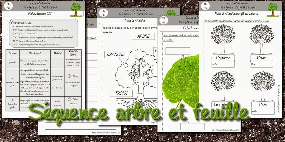 La maternelle de Laurène: Séquence arbre et feuille | automne ...
