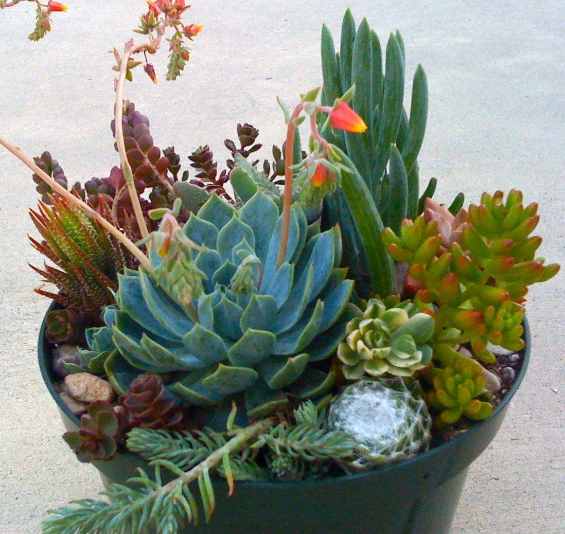 Succulent terrarium diy succulent cuttings wedding centerpiece
