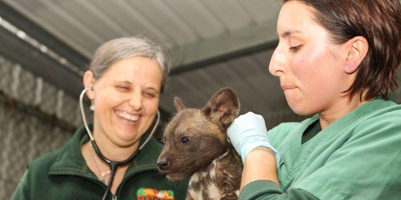 Perth Zoo Endangered animals, Animals, Rare animals