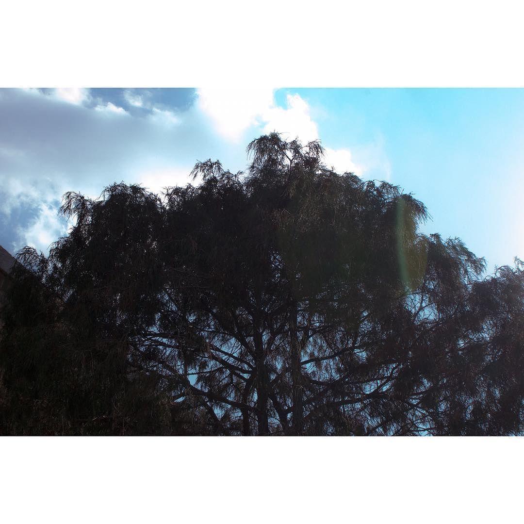 비라니  . . #sky #skyporn #tree #treestagram #하늘 #나무