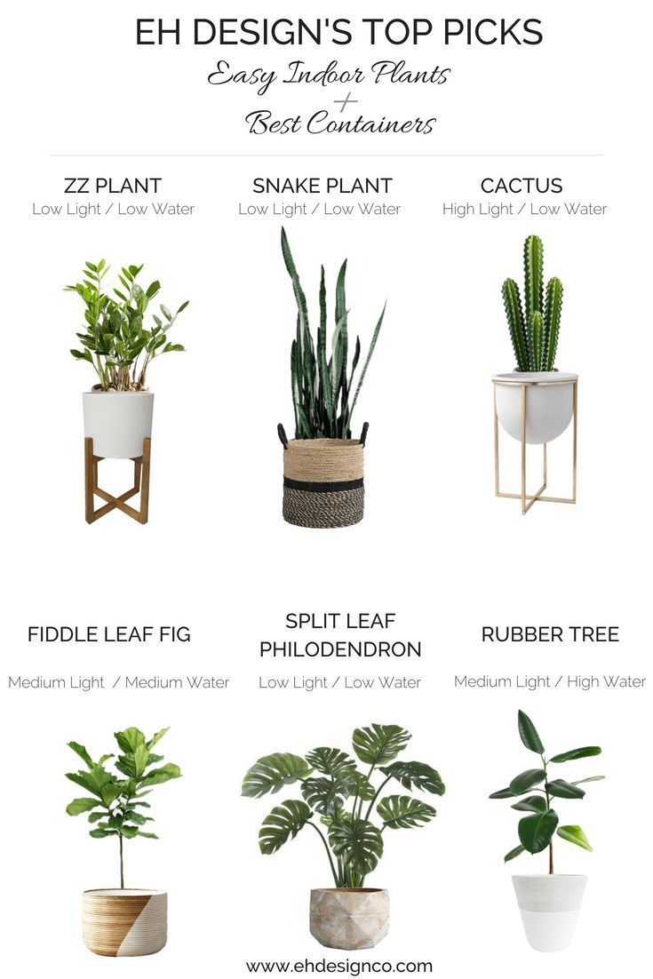 Photo of Easy Indoor Plant Guide | How to Keep them Alive + Best Container Guide