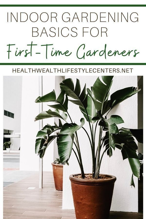 6ca70baa68358a435745b73dc9331453 - Living With Plants A Guide To Indoor Gardening