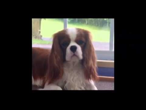 Major The Talking Dog - Little Audrey