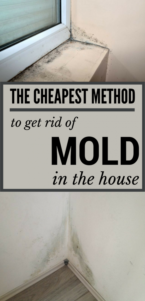 The cheapest method to get rid of mold in the house.
