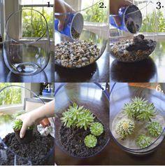 Como Hacer un Terrario de Suculentas #succulentterrarium