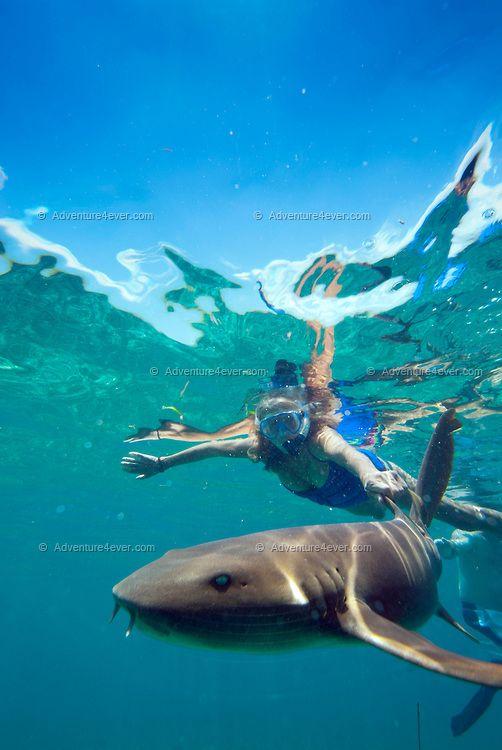 Amazing....best Trip Ever Belize-snorkling With Nurse