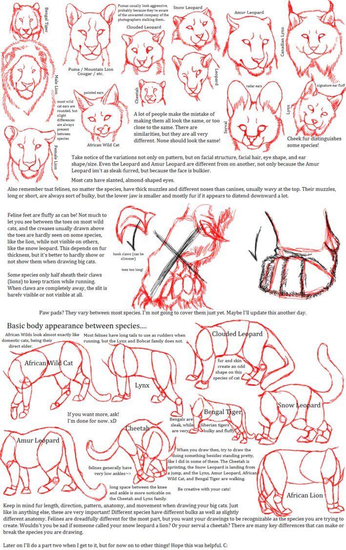 big_cat_anatomy_sketches_by_bloodlust_carman-d3jw1qg.png (709×1126 ...