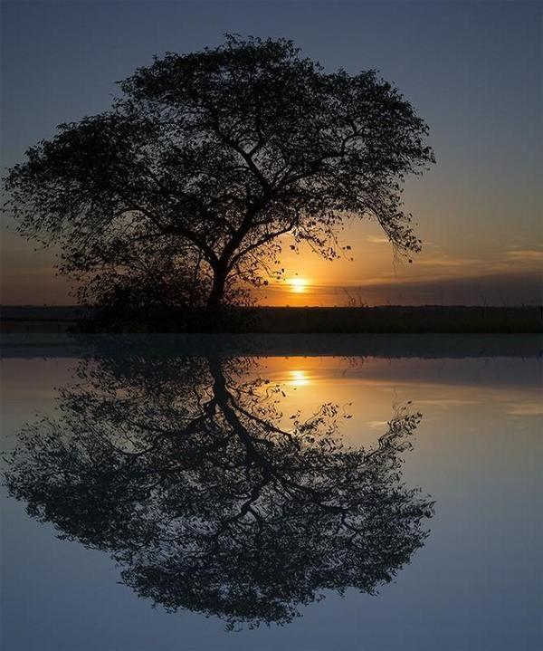 Reflejo en un espejo de agua