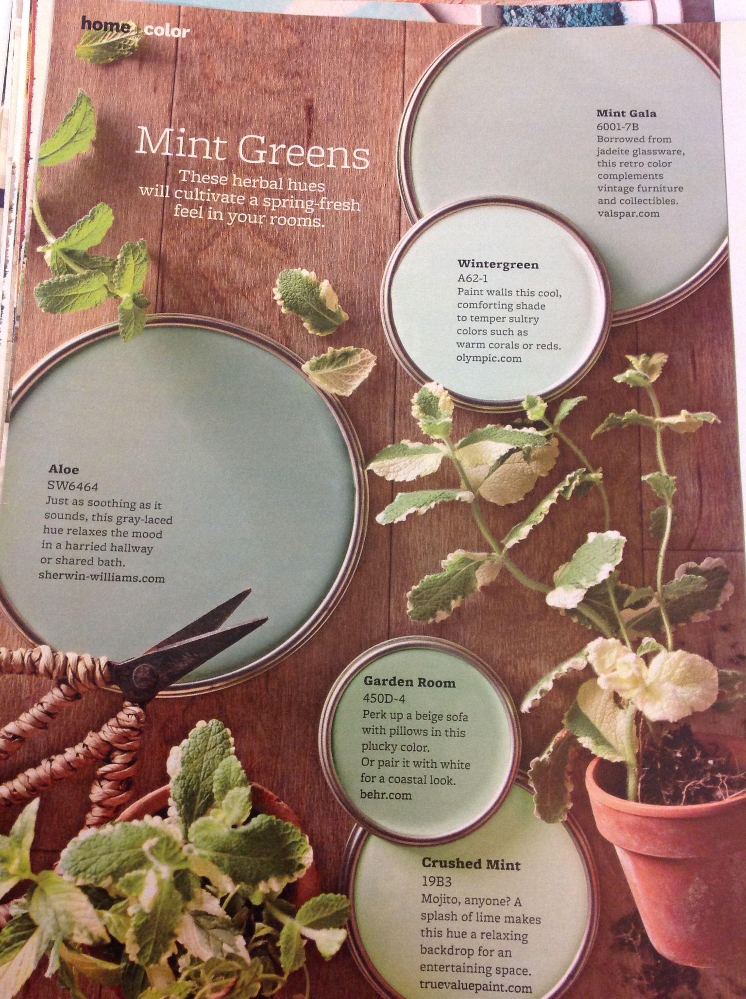 Mint greens dining room colors pinterest mint green room mint greens dzzzfo