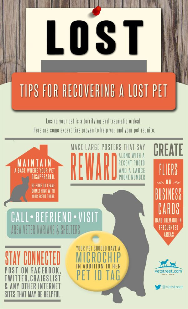 How To Find A Lost Cat Or Dog Infographic Dog Infographic Losing A Pet Losing A Dog