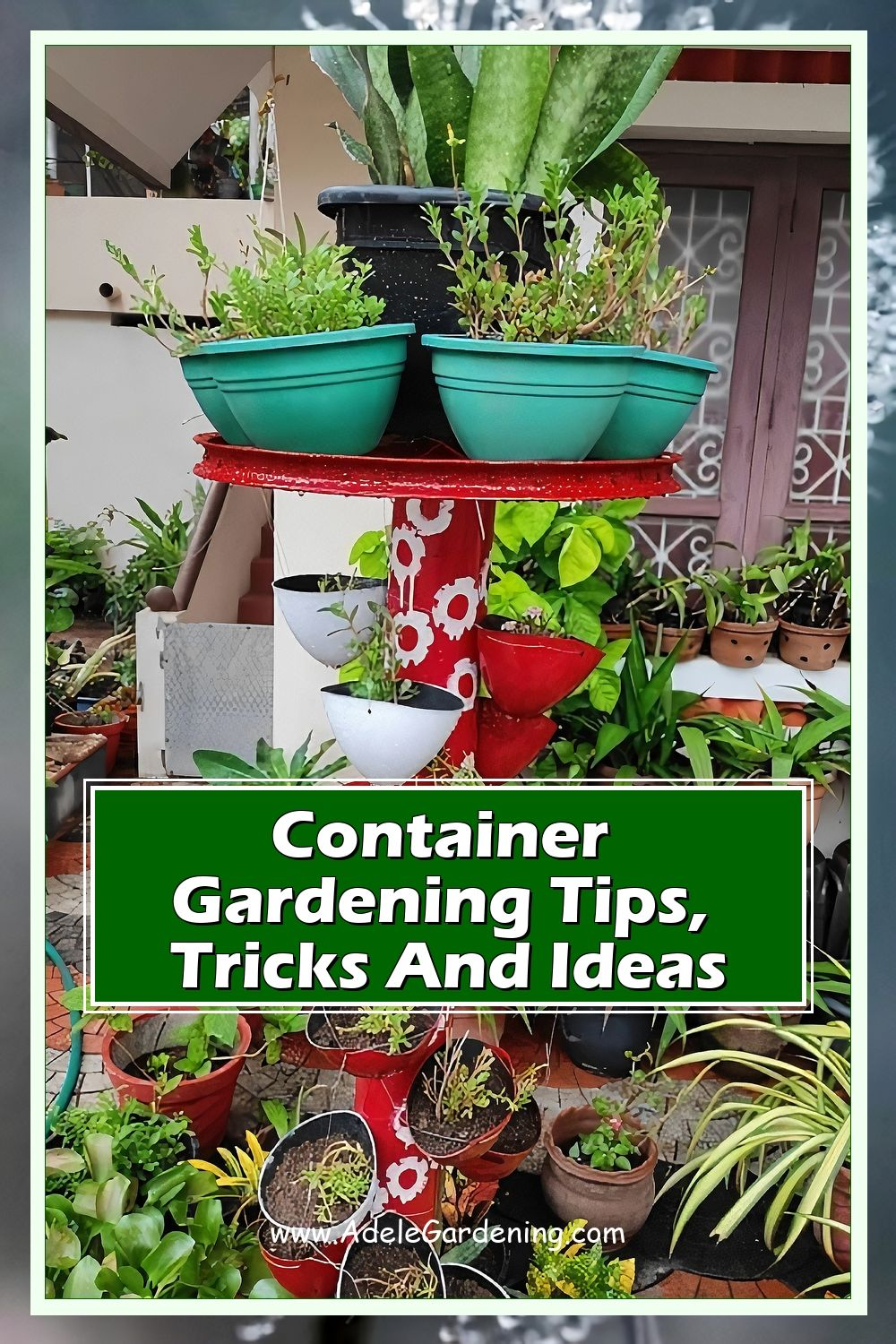 Gardening for beginners: container gardening. Find out how to create the best possible conditions for plants growing in pots and containers.