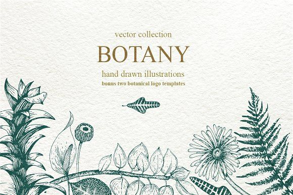 Botany Vector Collection