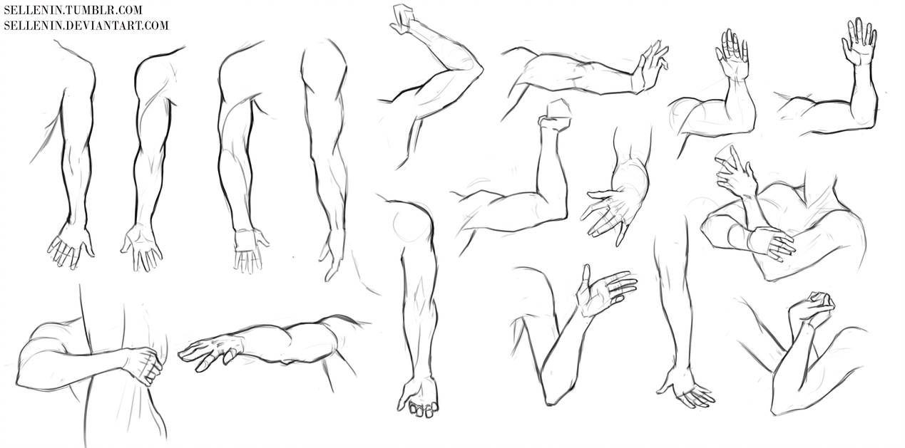 Arms And Hands Reference By Sellenin On Deviantart Hand Reference Pose Reference Art Reference Poses