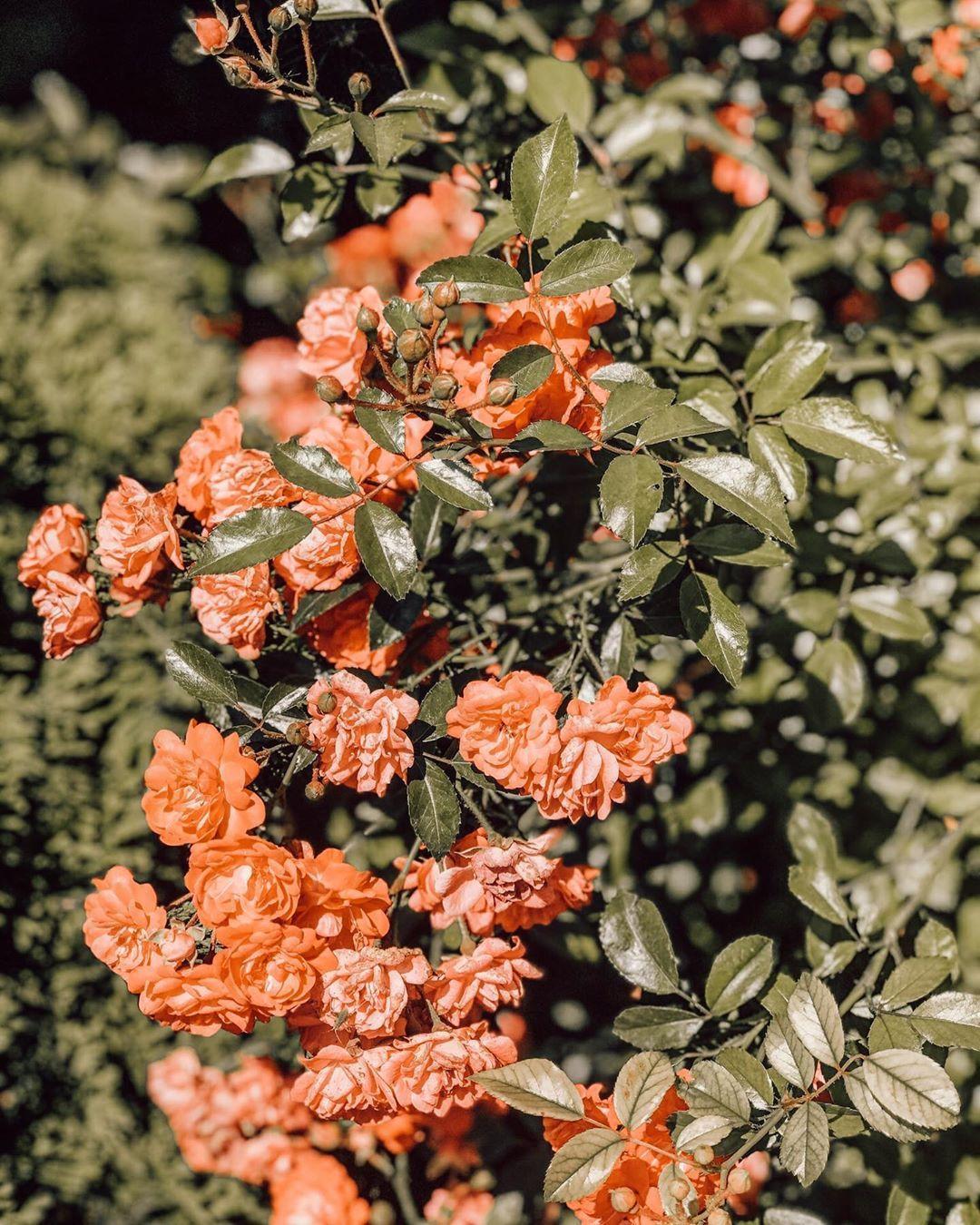 ☼ 𝐇𝐚𝐩𝐩𝐲 𝐓𝐡𝐮𝐫𝐬𝐝𝐚𝐲 ☼ . . . #goodmorning #goodmorningworld #gutenmorgen #gutenmorgenwelt #happyday #happythursday #happyday #enjoythelittlethings #moodforfloral #seeingthepretty #allthingsbotanical #blooms #flowers #flowergram #flowerlover #flowerphotography #flowerphotos #flowersofinstagram #nature #naturephoto #botanicalpickmeup #plantfocus #plantlove #plantstagram #greenery #plants #igers #igersaustria