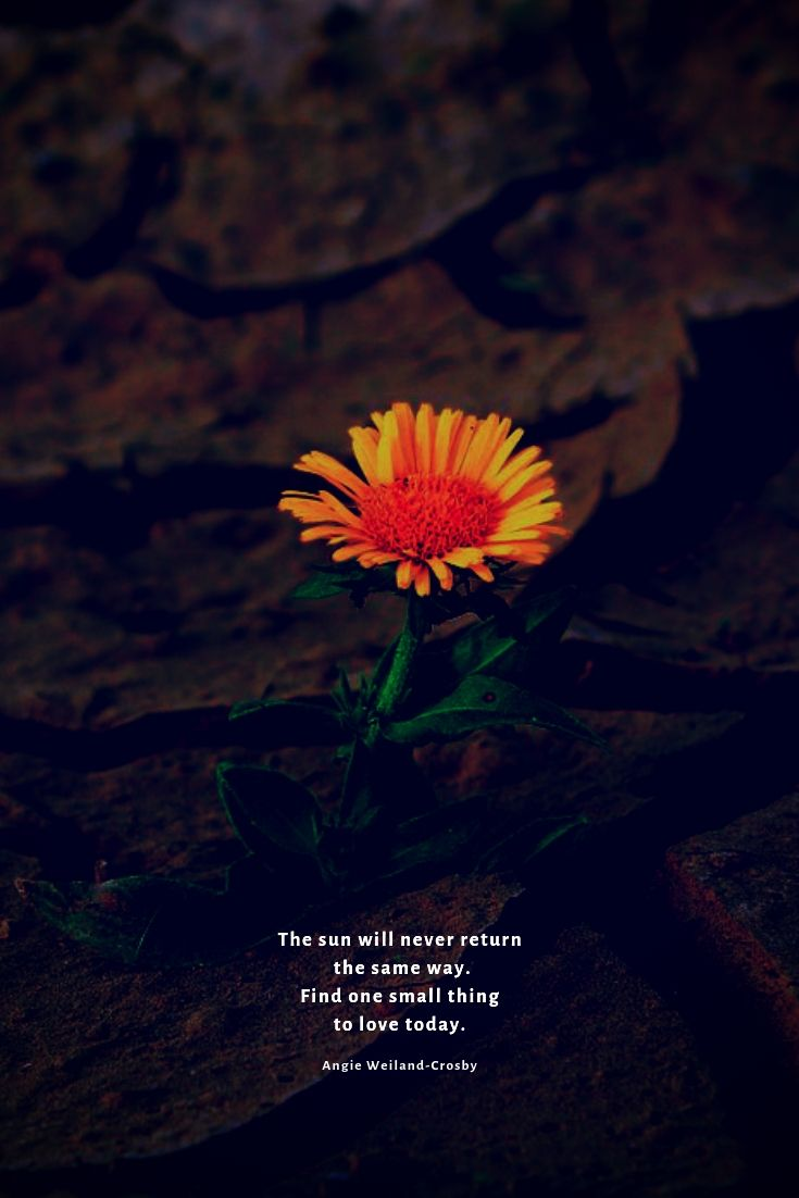 Time for Stillness  Nature quotes beautiful, Nature quotes