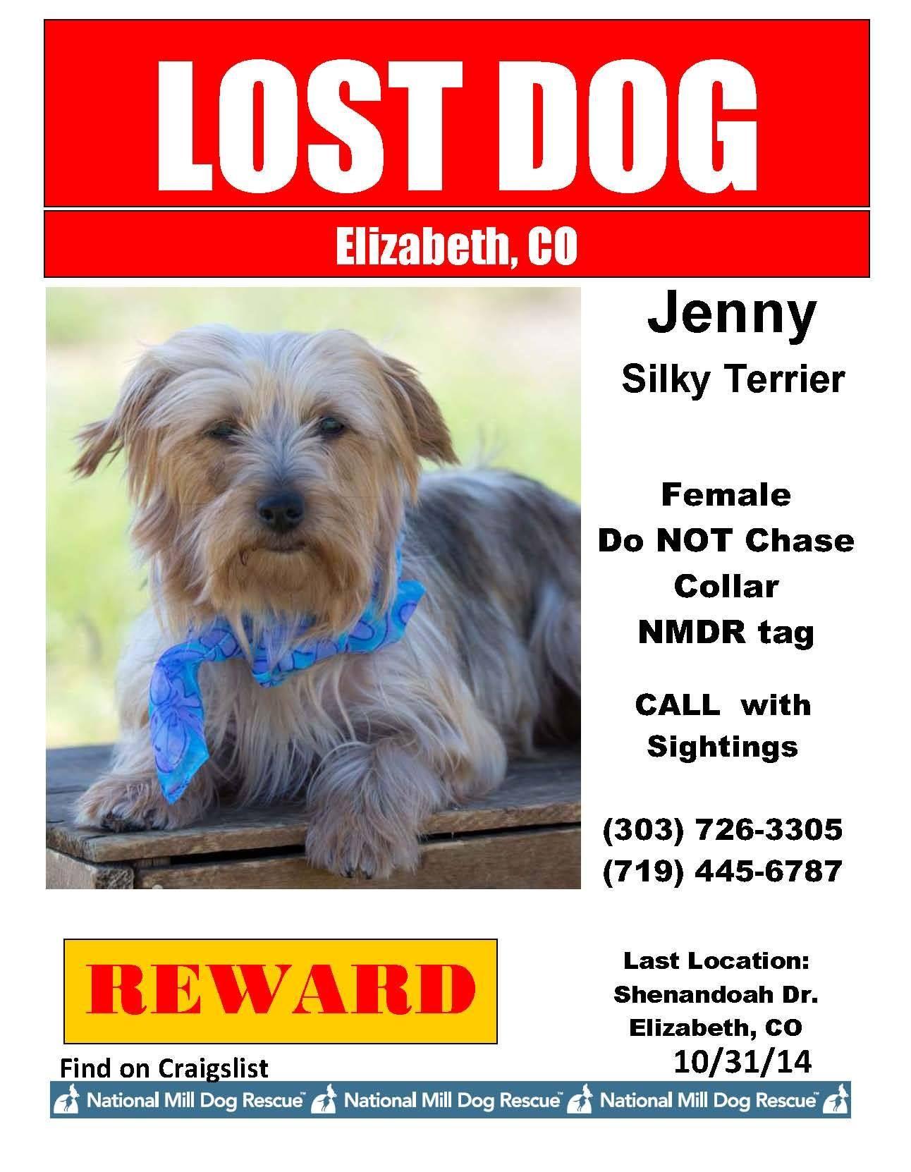 Lost Dog Elizabeth Co Jenny Silky Terrier Please Share