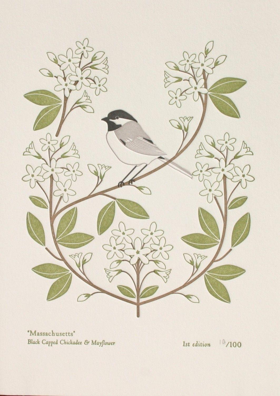 black capped chickadee & mayflower massachusetts bird