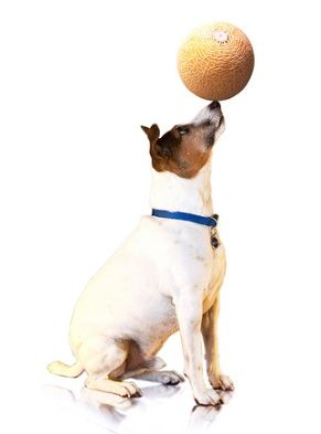 A List Of The Top 10 Cool Tricks To Teach Your Dog More Things To