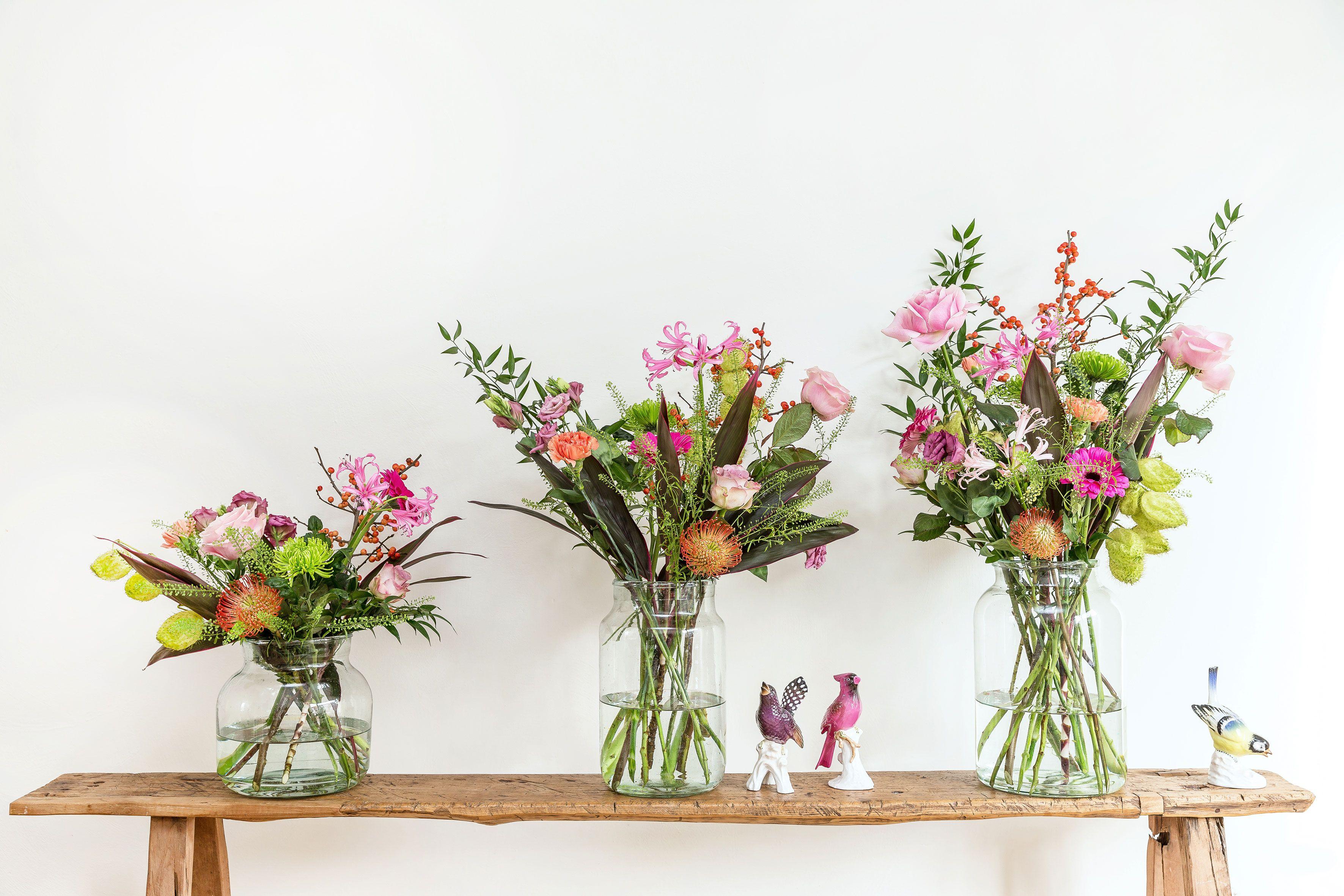 Afbeeldingsresultaat voor bloomon