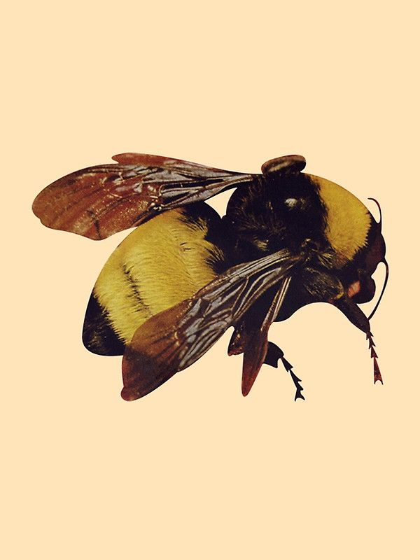 99784a26bb7c Image result for flower boy art tyler the creator bee