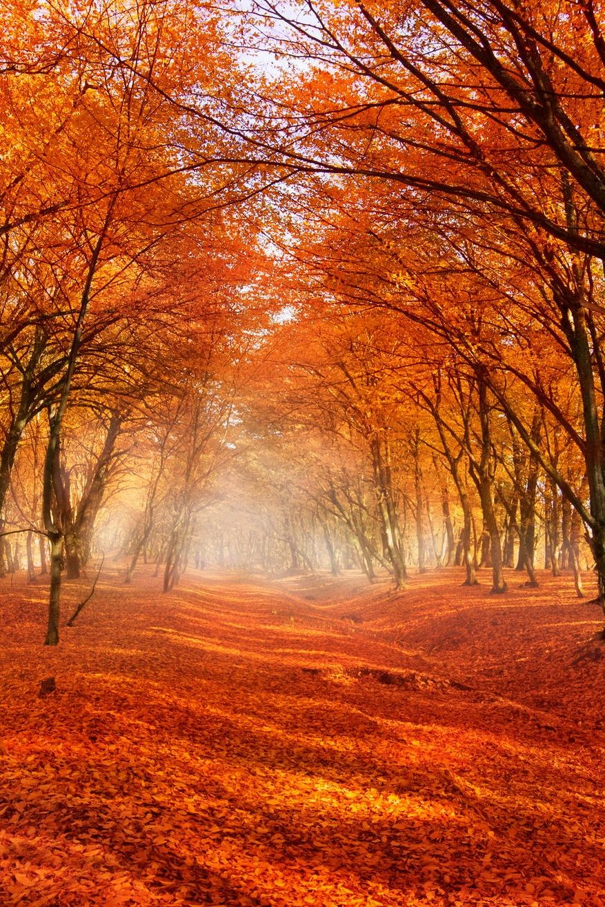 Autumn Falling Leaves Live Wallpaper Beautiful Fall Scenery Orange Leaves Scattered Across An