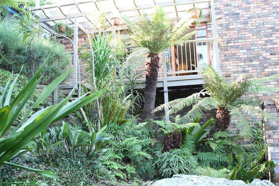 Image result for side fern garden ideas | Native Garden Ideas ...