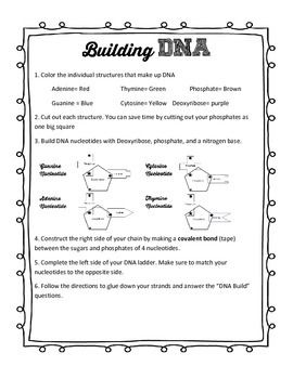 This actiivty walks students through creating DNA nucleotides, the DNA double helix, and the steps of DNA replication. The cut out lab has a DNA assemble page that cuts down the center to reveal replication. This page has two pages of student questions.