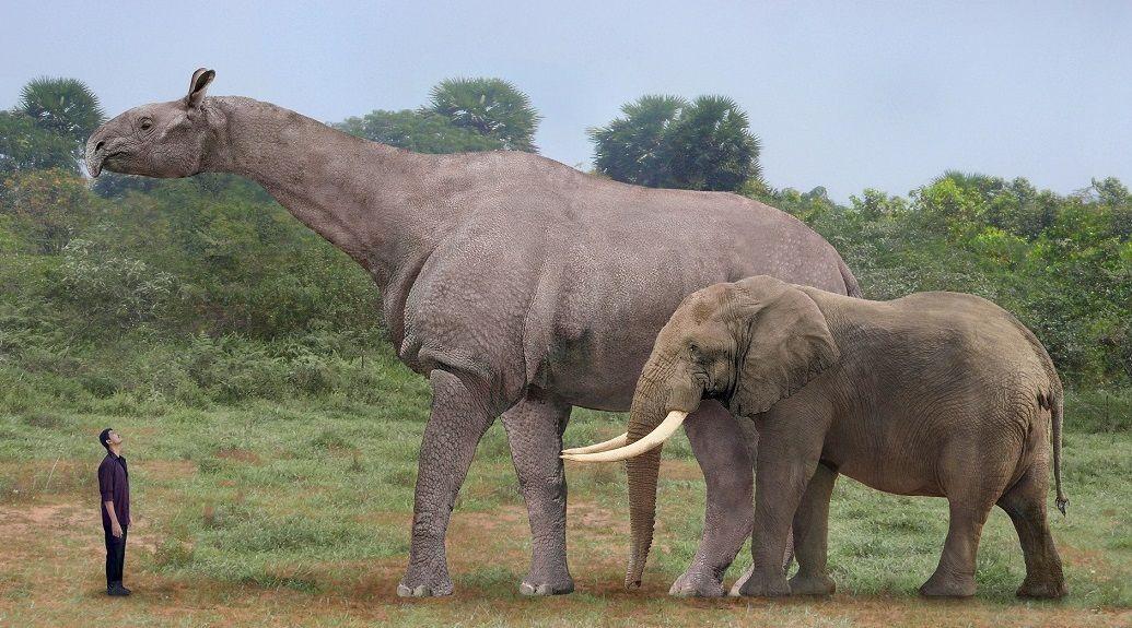 paraceratherium - Pesquisa Google | Prehistoric and Extinct Life ...