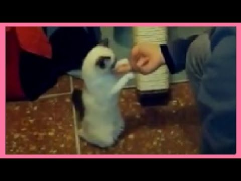 Cat Training - Walk on Leash, Clicker Training, Touch Hand with Treats - Video Compilation - YouTube