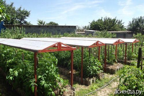 Сад. Задумывалось одно, получилось в два раза лучше.: Группа Органическое земледелие