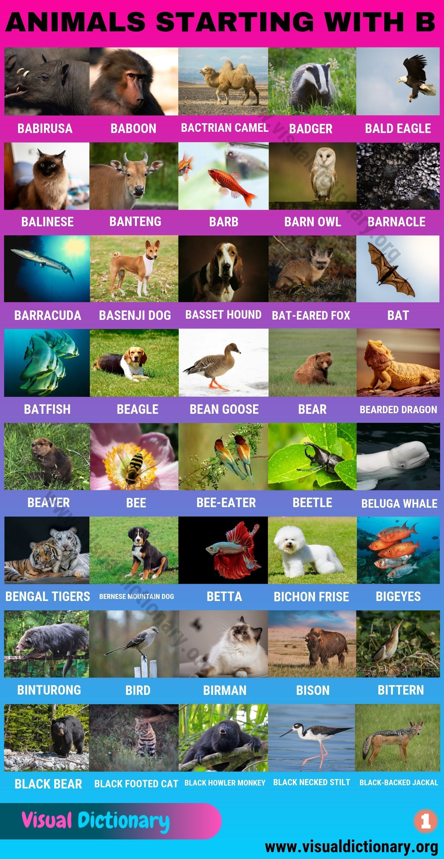 Animals That Start With B 80 Intriguing Animals Starting With B Visual Dictionary Animals Starting With B Visual Dictionary Animals Name In English