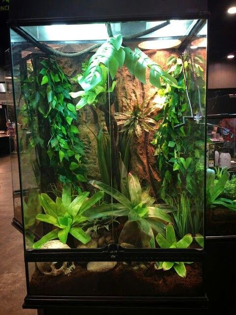 Tropical Terrarium Lizard Stuff Lizard Terrarium Tropical