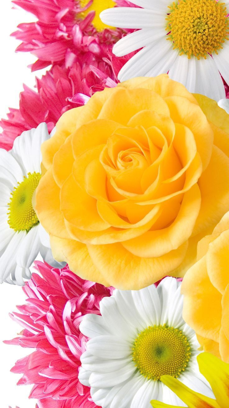Idea by Janae on Iphone wallpapers Flower wallpaper