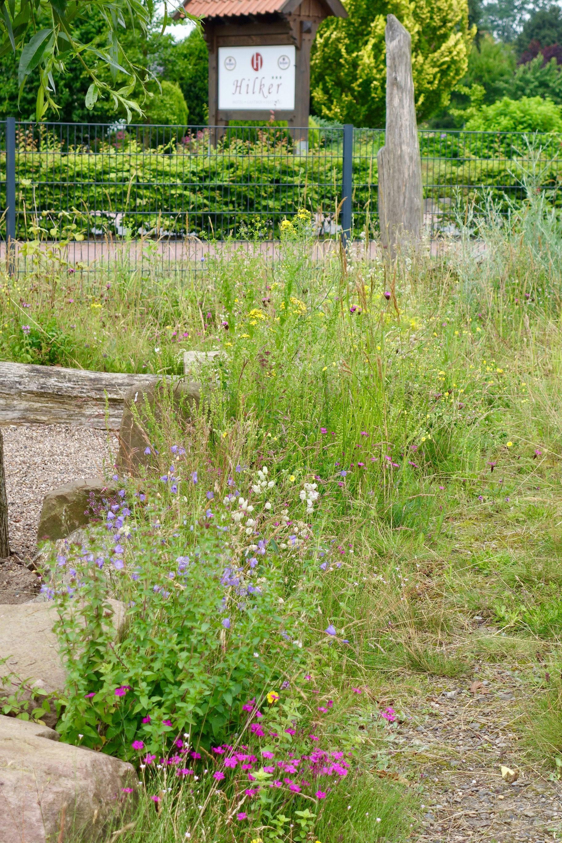 So Schon Ist Schooter Magerrasen Pflanzen Garten Rasen