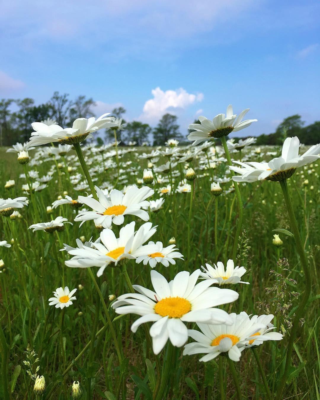 I'm on the pursuit of happiness  #exploremn #minnesota #onlyinmn #summertime by alikafaythe