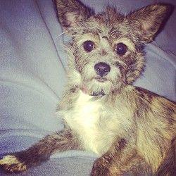 Adopt Precious On Cute Animals Pets Animals