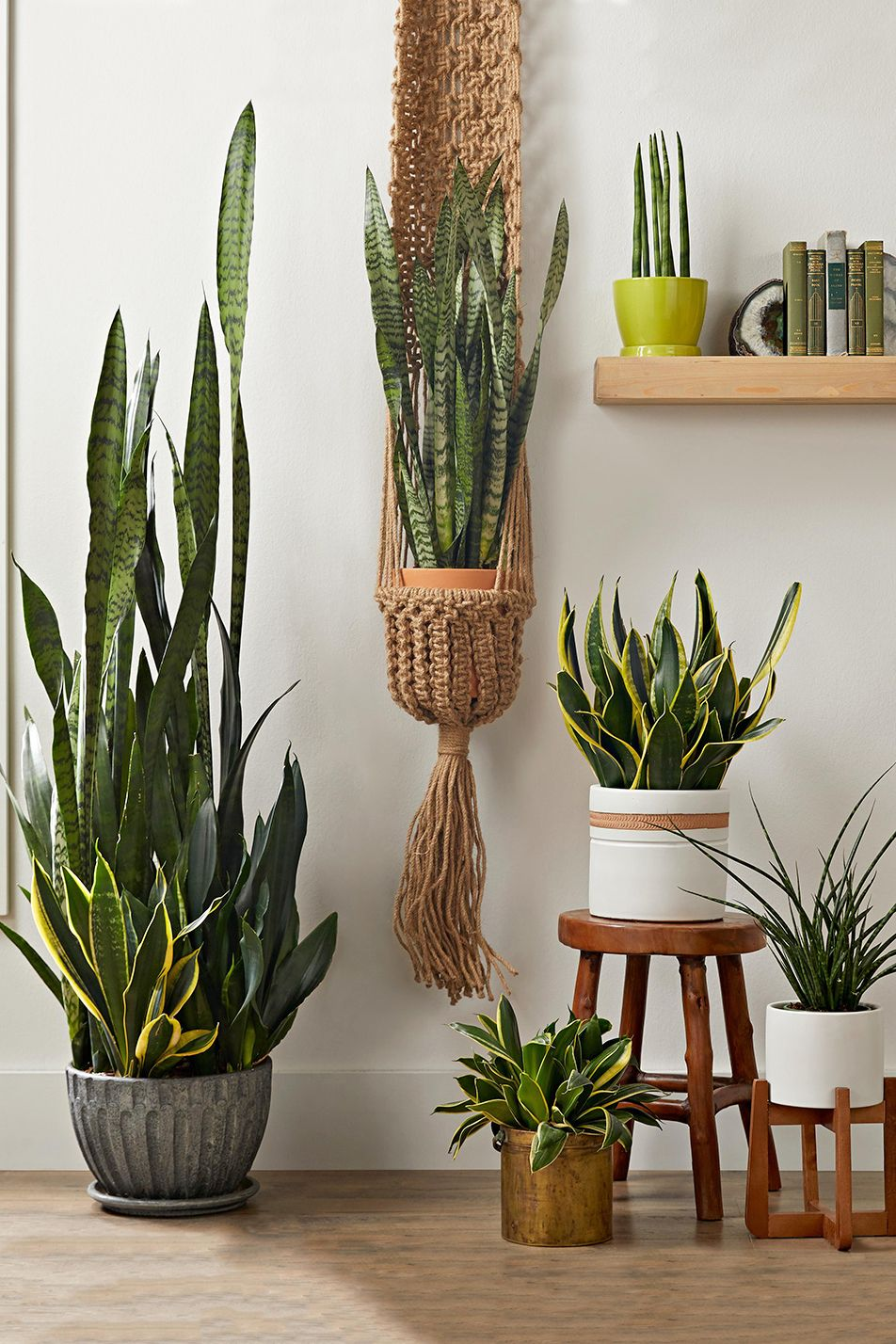 17 Drought-Tolerant Houseplants You Can't Kill -   17 planting Indoor desk ideas