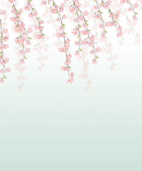 うす緑のバックしだれ桜無料