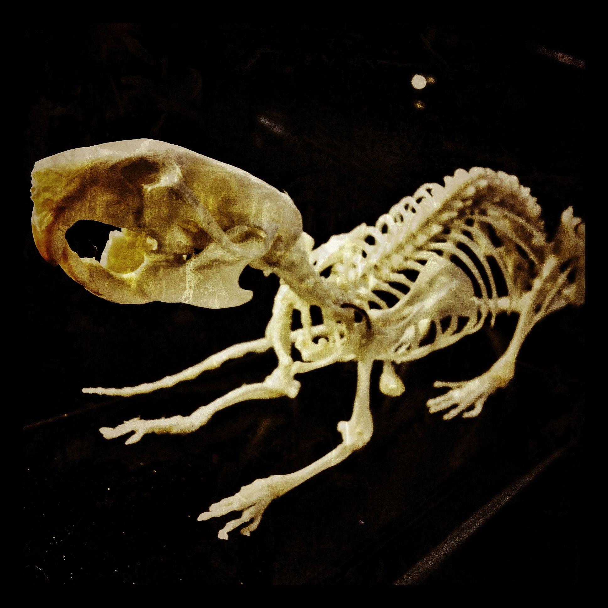 составить интересную скелет хомяка картинки ползунка поля