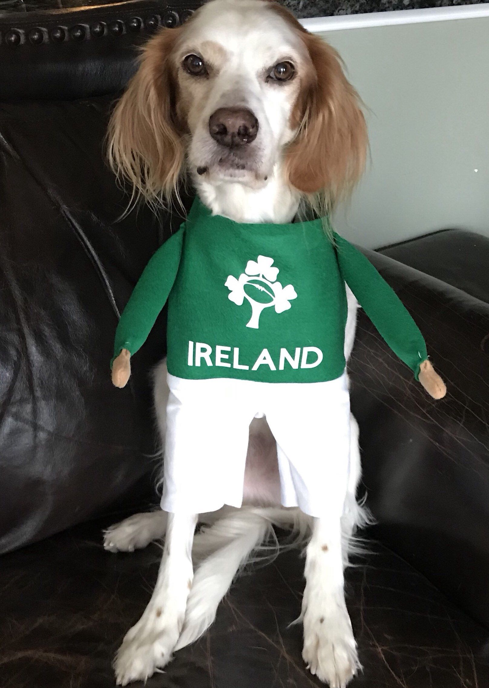 St Patricks Day Costume Dress Your Dog In An Irish Rugby Costume