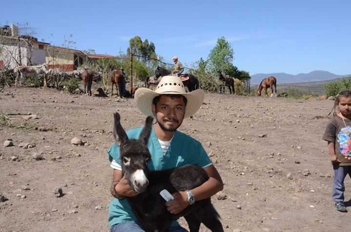 Courtesy: Donkey Welfare Symposium, Davis, CA (USA).