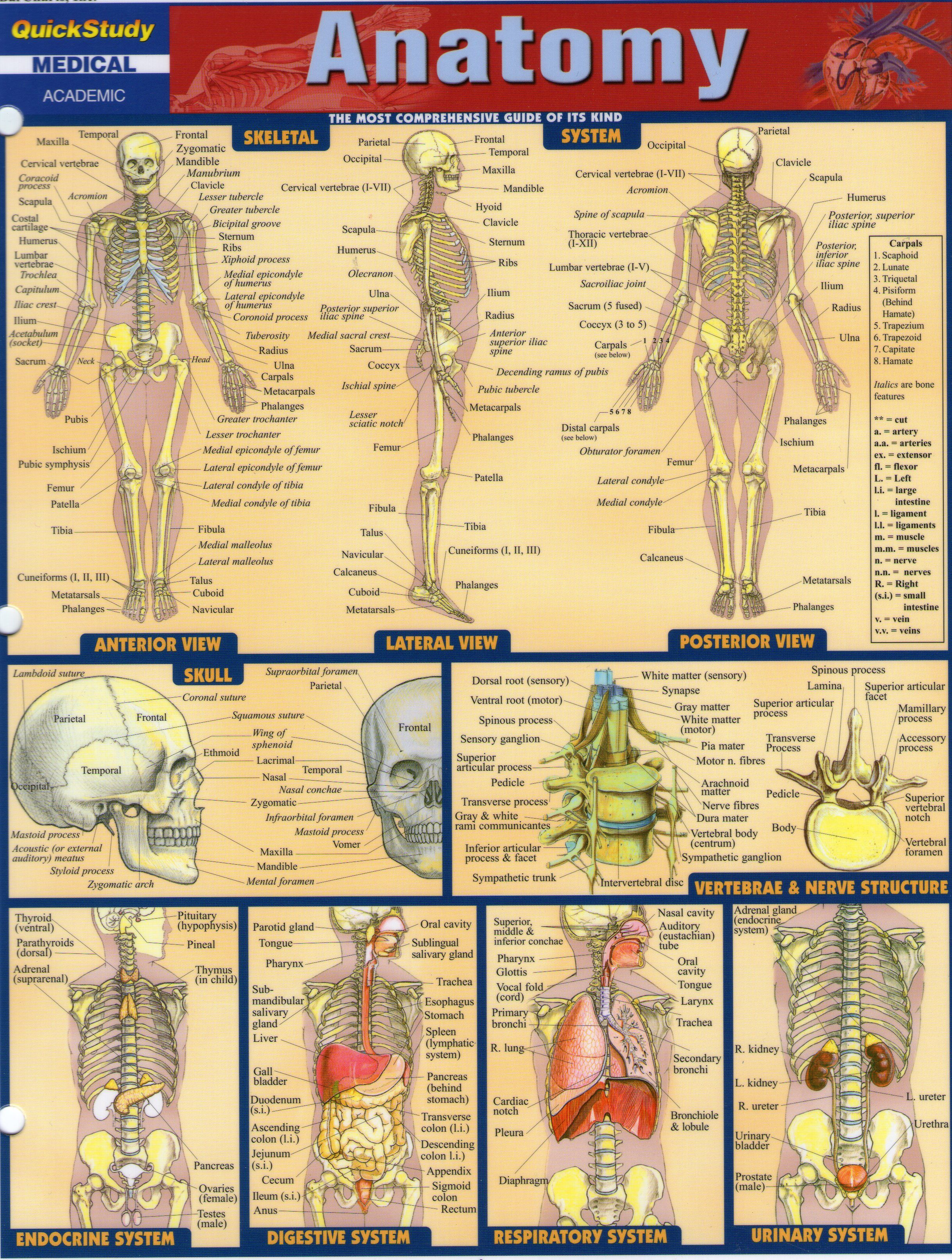 Anatomy 1   Learning- School Age   Pinterest   Anatomy, College ...