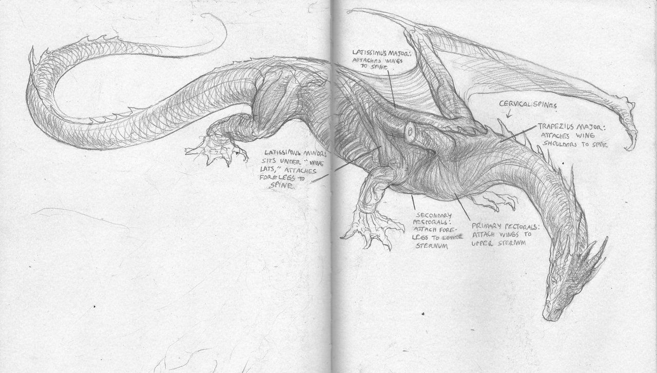 smaug drawing - Google Search