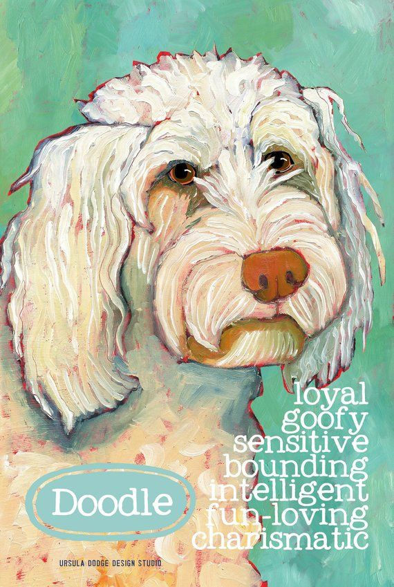 Goldendoodle No 1 Magnets Coasters And Art Prints